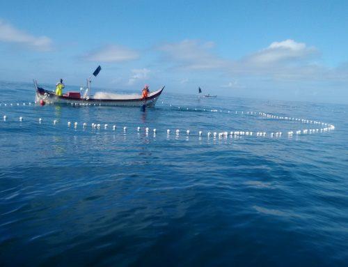 Impacto positivo e meio ambiente: conheça o negócio social Olha o Peixe!
